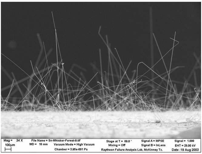 A forest of tin whisker grows on a test sample.